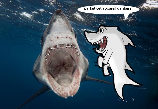 appareil dentaire requin